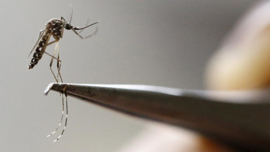 Dengue: circular issued to create mass awareness