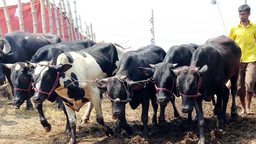 Govt sets rawhide price for sacrificial animals