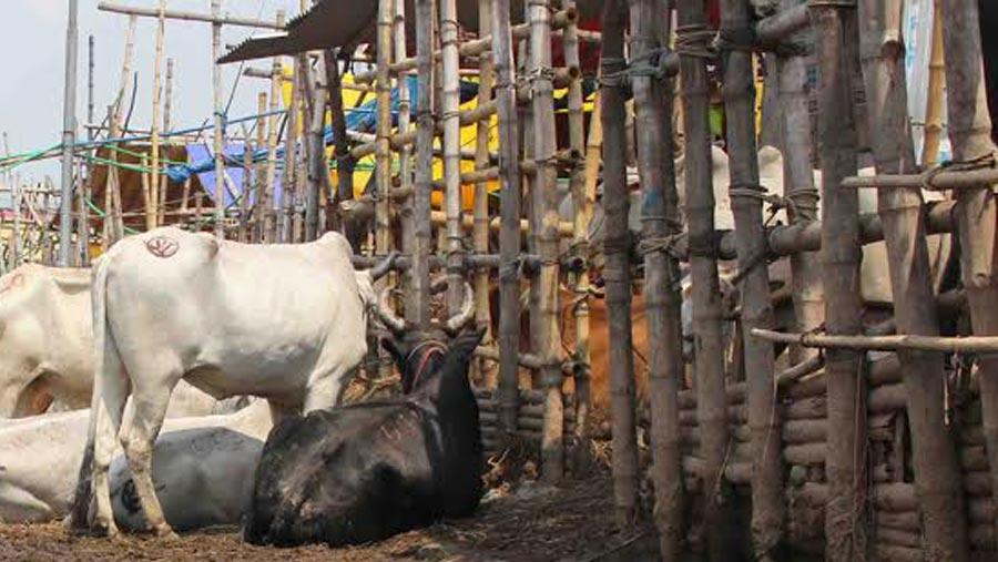 Govt forms 8 surveillance teams for city cattle markets