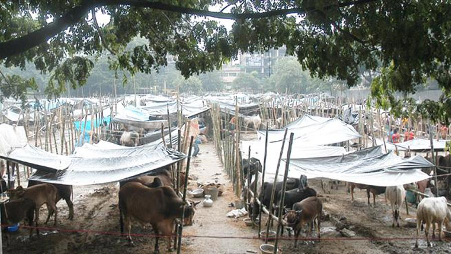 DSCC will remove wastes of sacrificial animals within 24hrs