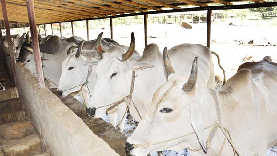 Govt issues instructions for Qurbani-haats to ensure health safety