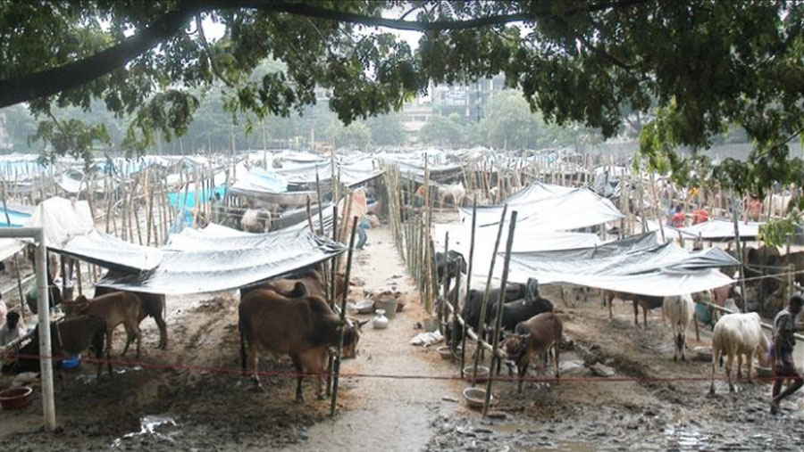 Govt asks for buying, selling sacrificial animals online